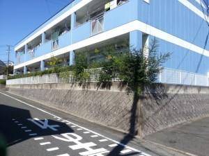 トラ26B庭木